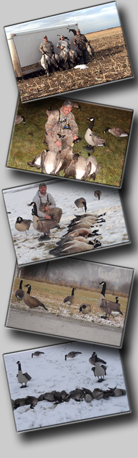 X Flapper Goose Decoy The X FLAPPER is Now on a New